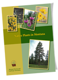 Native Plants in Montana Booklet